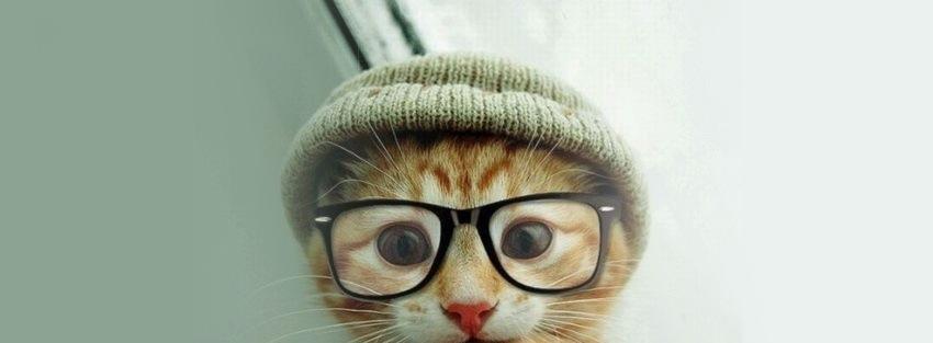 Nerdy-Cat